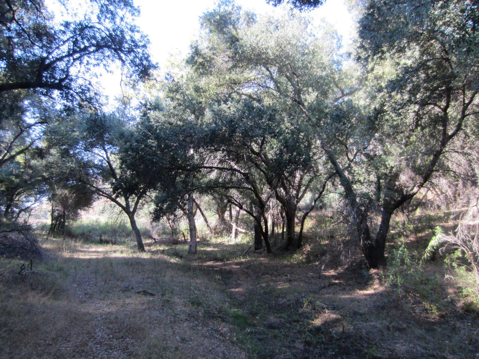 Consulting Arborist