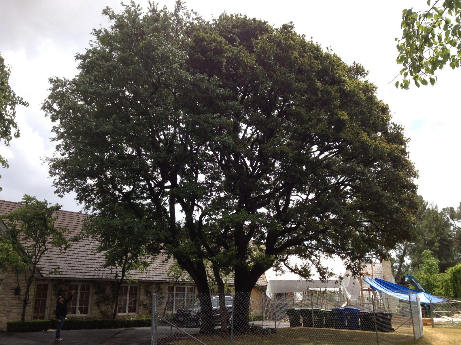 Registered Consulting Arborist