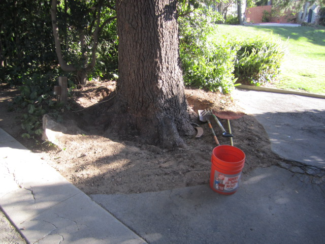 Certified Arborist Near Me